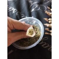 1 Gram Joint Champaign Kush