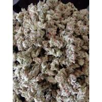 Strawberry Cane - Indoor - 1g